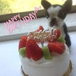 ワンコ Birthday ケーキ